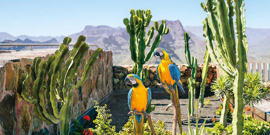 Spain, Canary Islands, Gran Canaria, Couple of parrots, blue-and-yellow aras