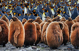 Expedition Antarctic - ice and amazement in the Antarctic Circle