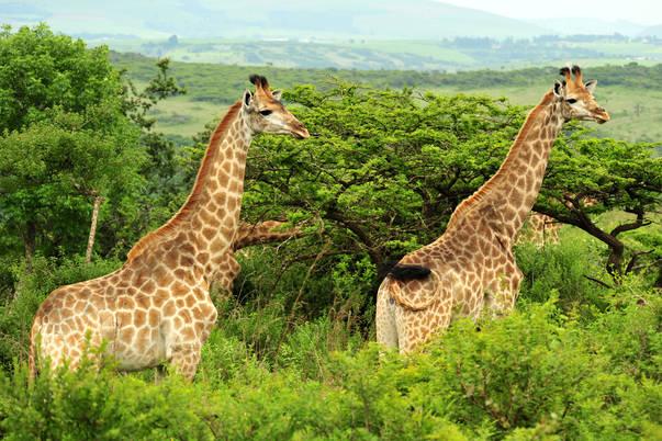 Dating-Stätten in Ostlondon Südafrika Dating-Seiten für Asthmatiker