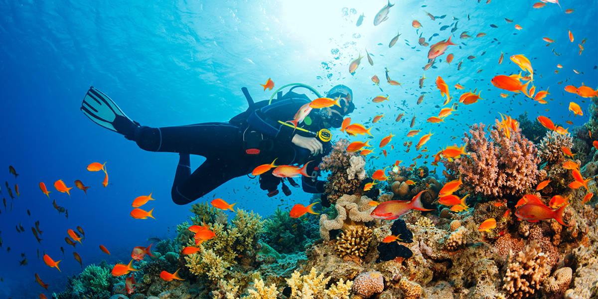Underwater worlds.