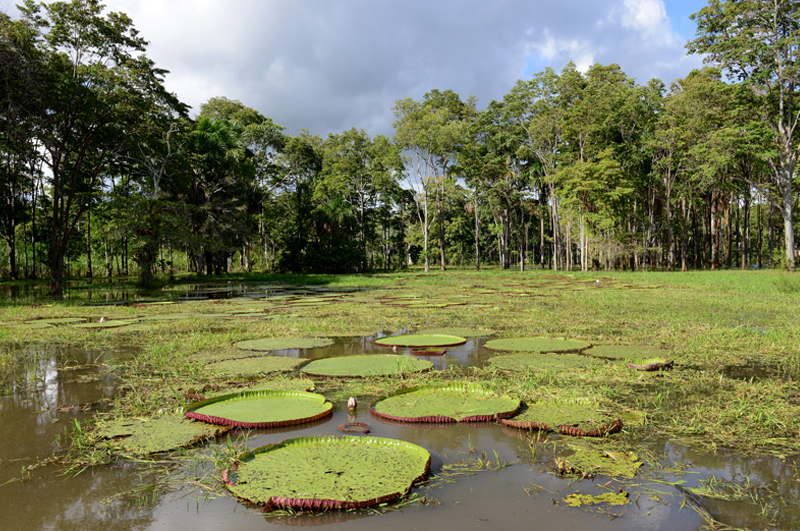Amazonas6_01