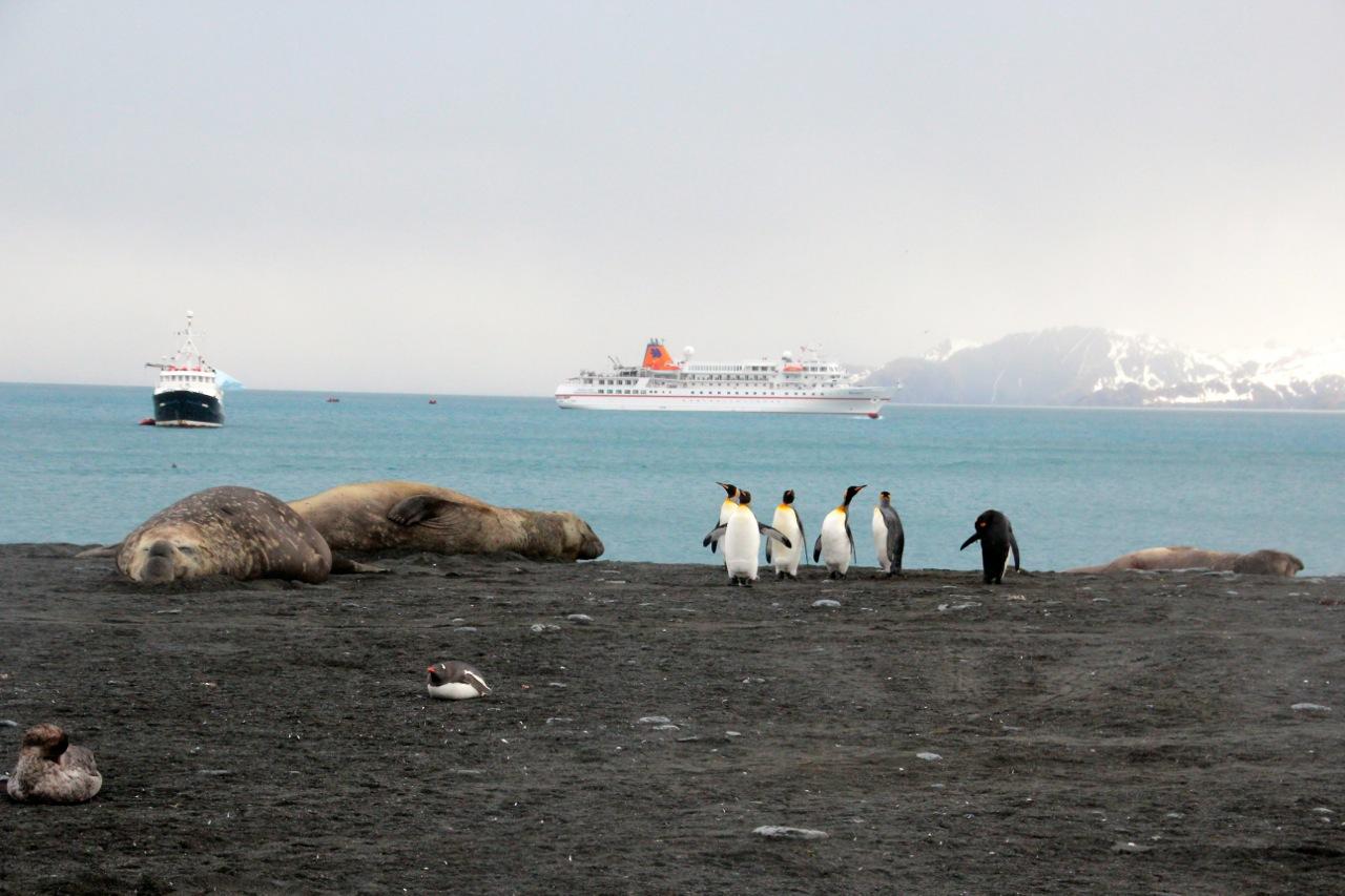 Antarktis_Kreuzfahrt_Bremen_Gold_Harbour_Tiere_pushreset
