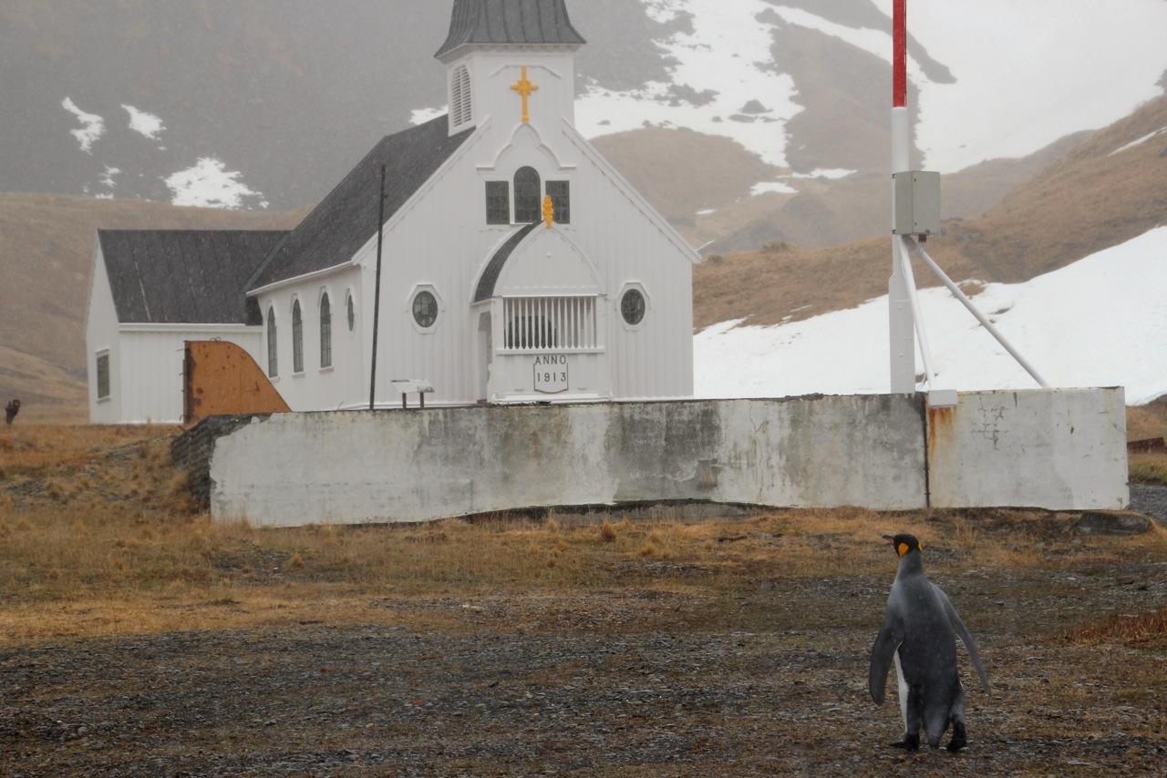 Antarktis_Kreuzfahrt_Bremen_Grytviken_Pinguin_Kirche_pushreset