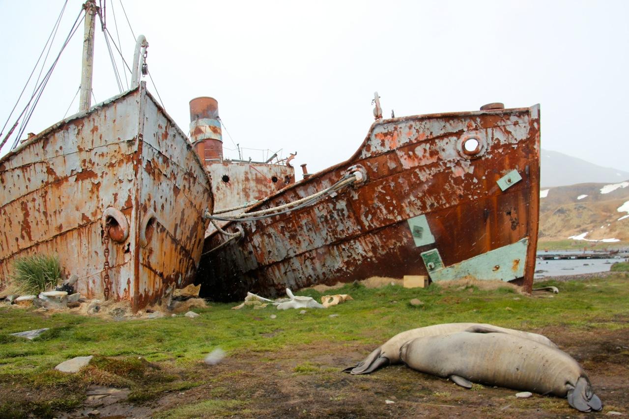 Antarktis_Kreuzfahrt_Bremen_Grytviken_Schiffe_pushreset