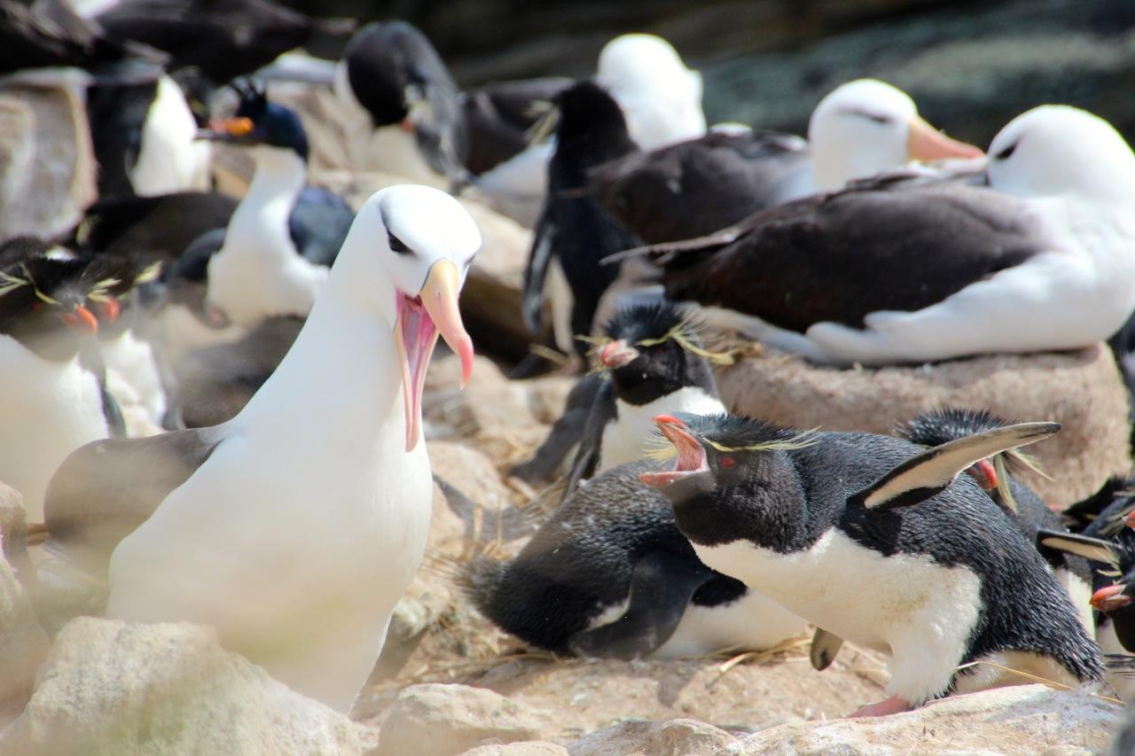 Antarktis_Kreuzfahrt_Bremen_New_Island_Streit_pushreset