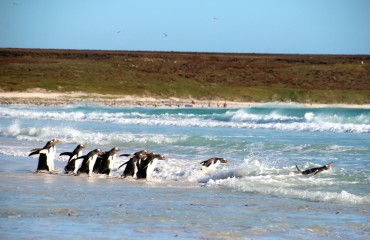 Antarktis_Kreuzfahrt_Bremen_Volunteer_Beach_Pinguine_Wasser_pushreset