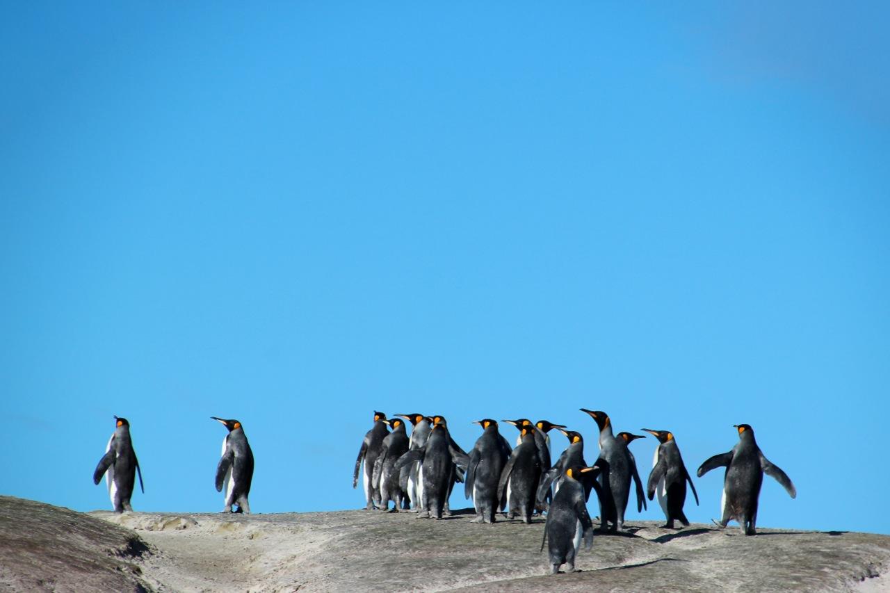 Antarktis_Kreuzfahrt_Bremen_Volunteer_Beach_Pinguine_pushreset