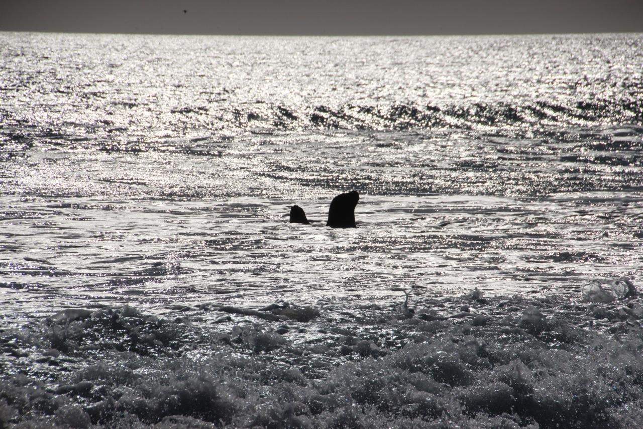 Antarktis_Kreuzfahrt_Bremen_Volunteer_Beach_Robben_pushreset