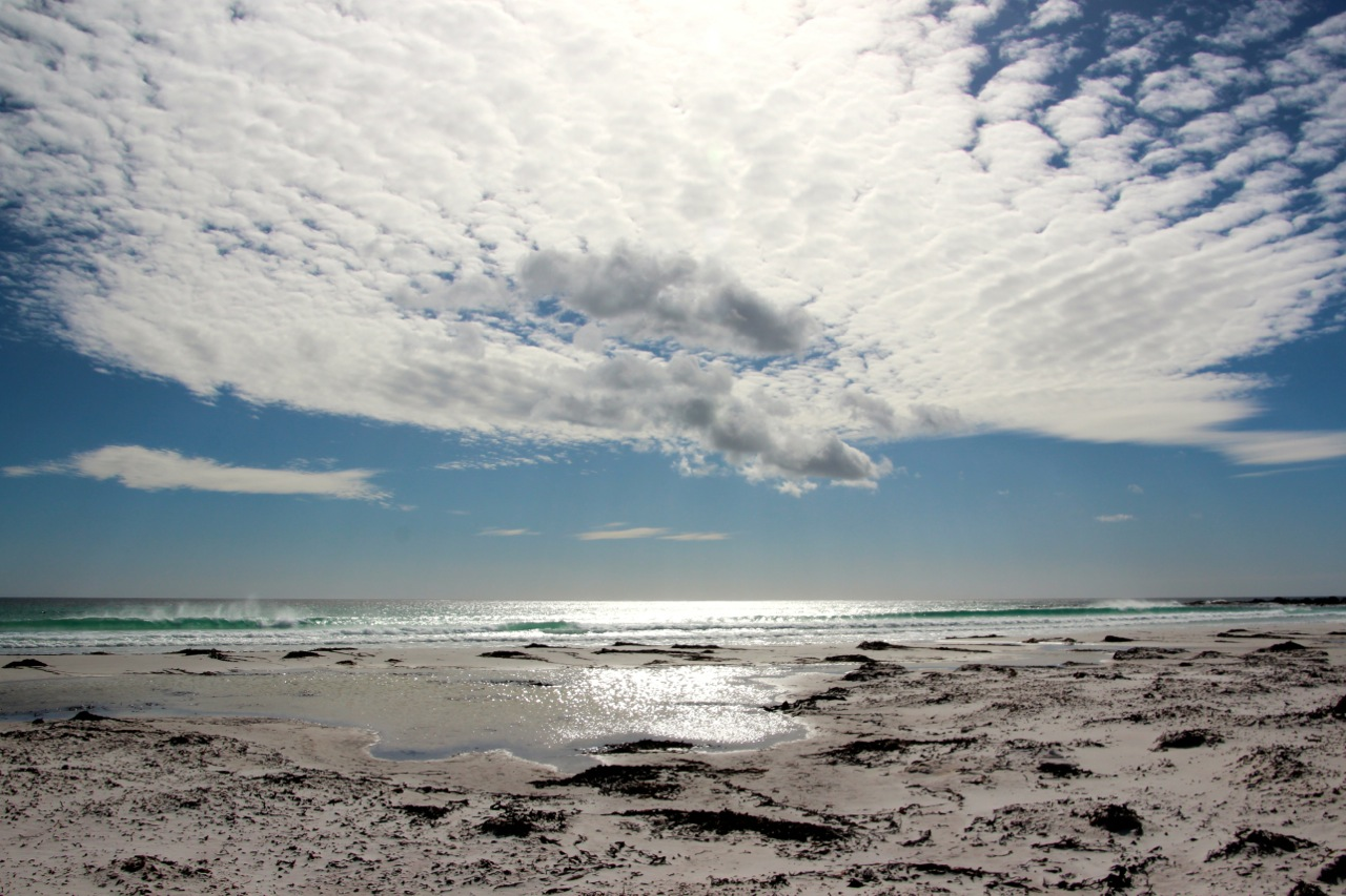 Antarktis_Kreuzfahrt_Bremen_Volunteer_Beach_Strand_pushreset