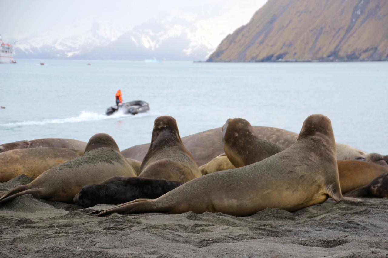 Antarktis_Kreuzfahrt_Robben_Schiff_pushreset
