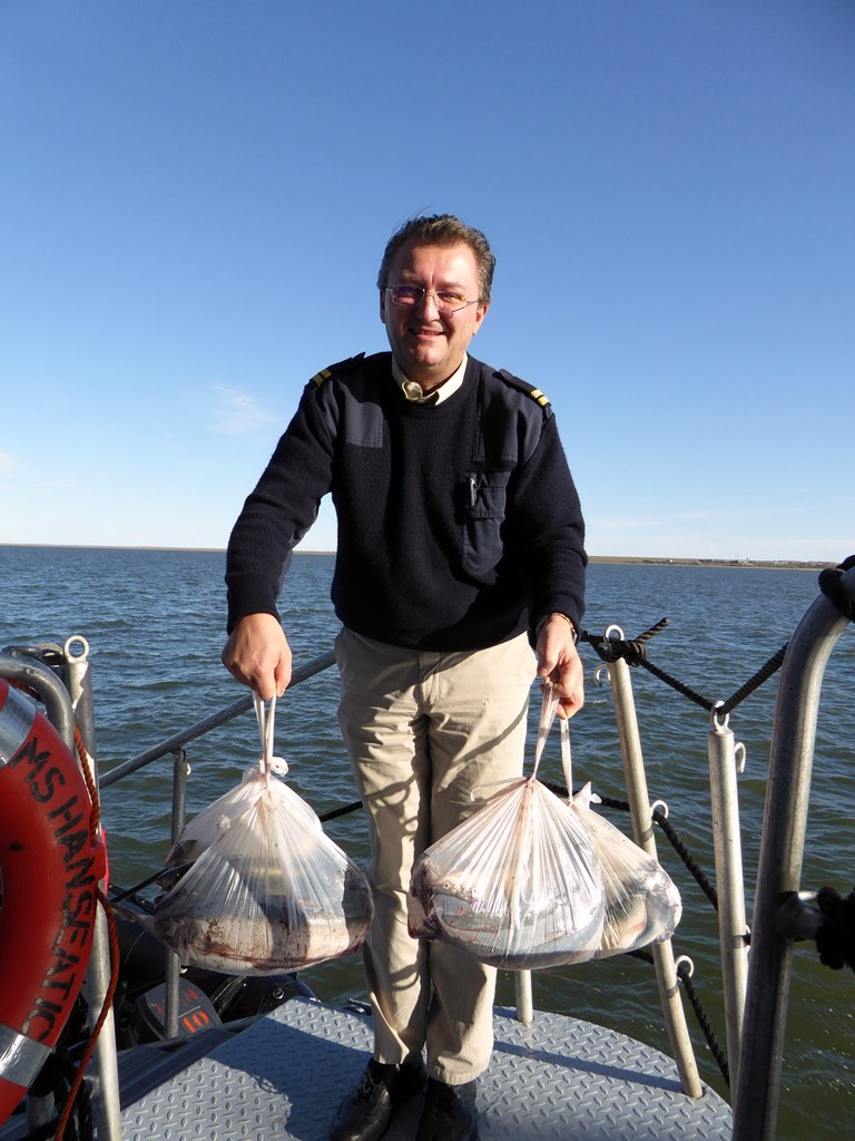Ayon Island Joachim Herrmann BN T.LANGE-HITZBLECK