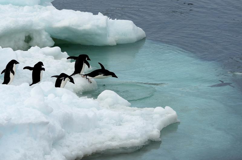 Antarktis6