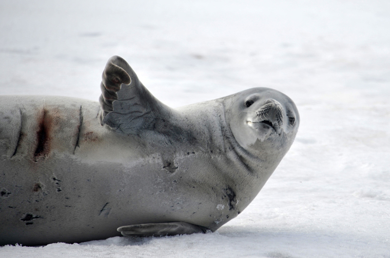 Antarktis7