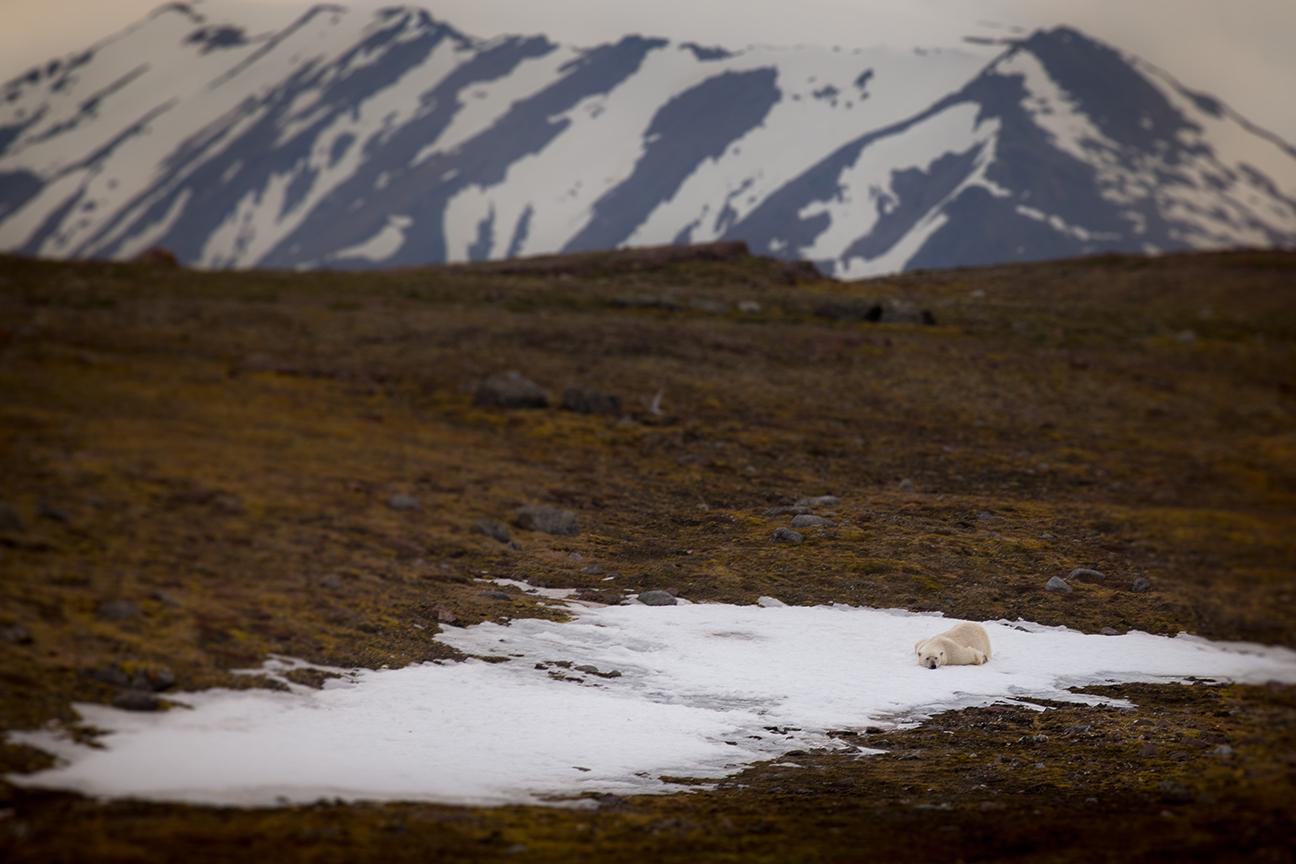 Spitzbergen_01_Juli2014