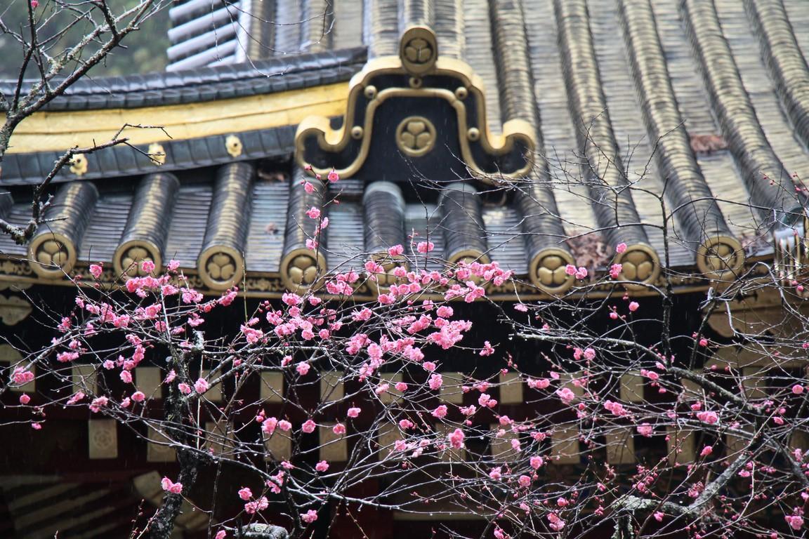 18 Kirschblüten