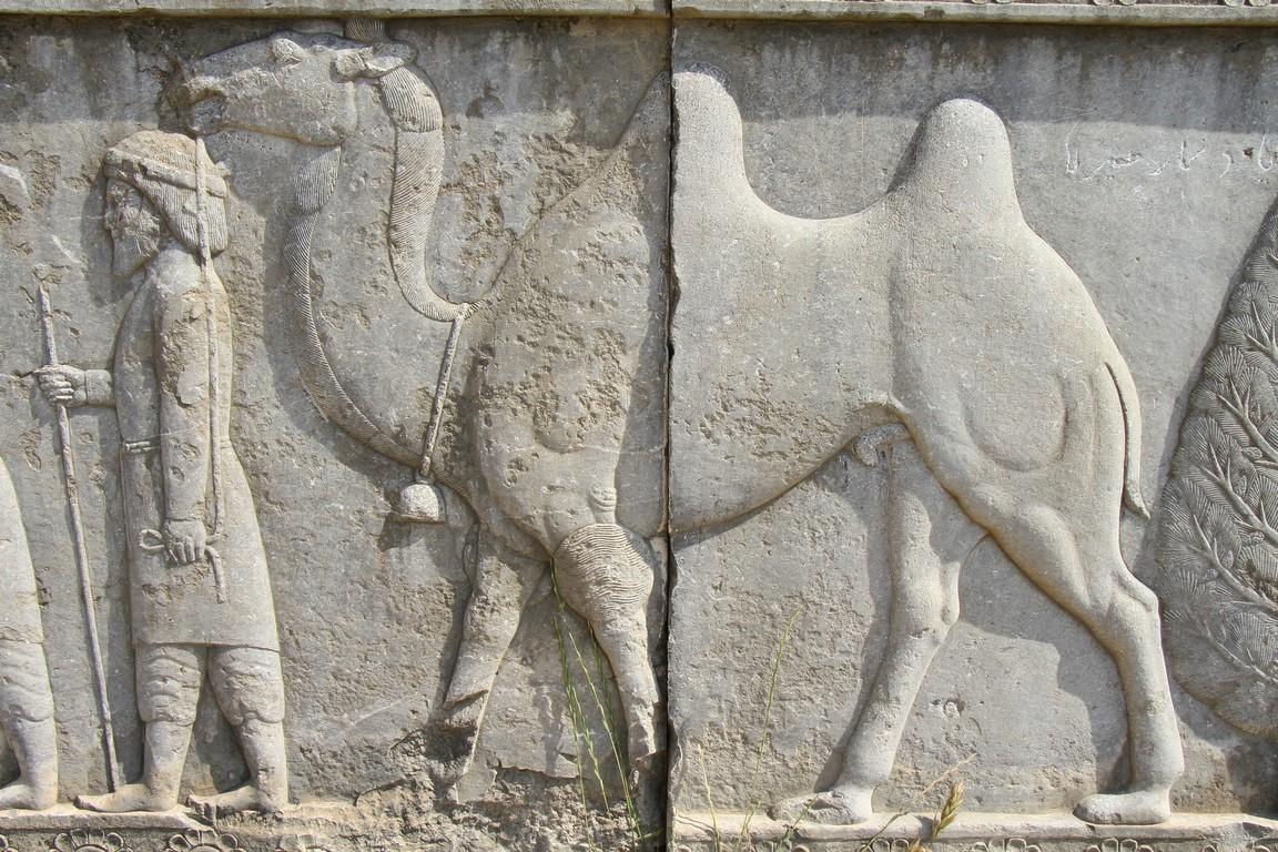 123 Bakrisches Kamel, Apadamaaufgang (Copy)