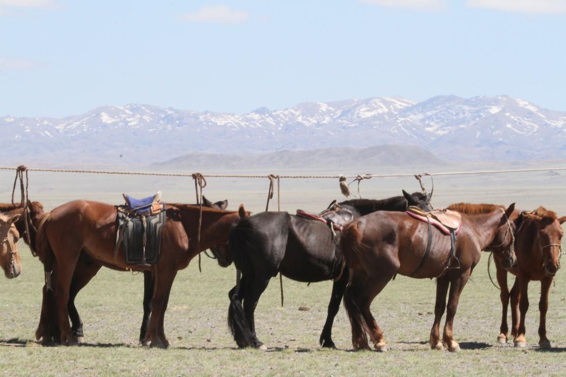 Pferde an der Wäscheleine (Copy)
