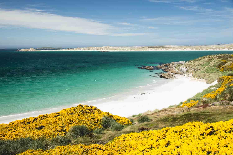 Falklands-HL-Gipsy-Cove