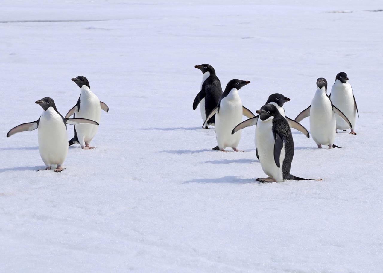 HAN1522_Pinguinballett