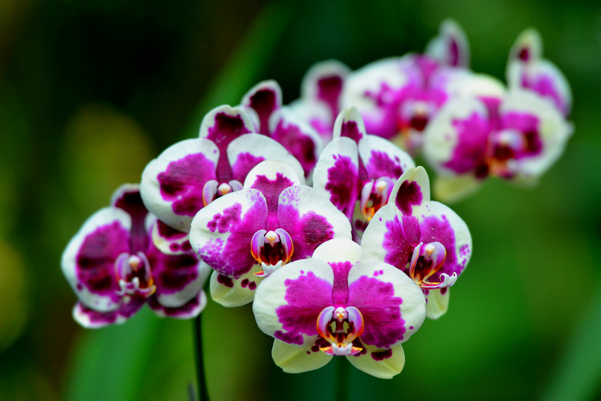 National Orchid Garden of Singapore_credits to Derrick See-3