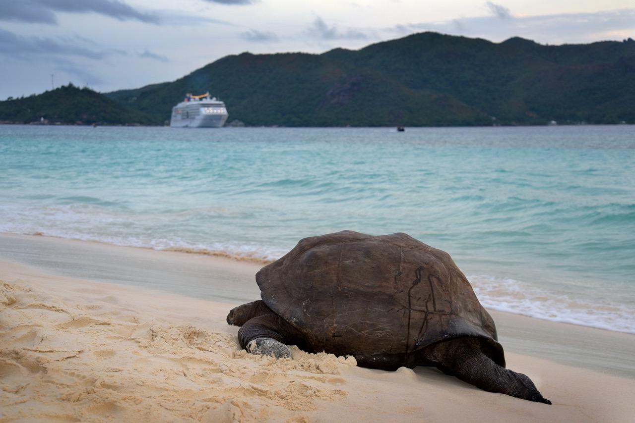 Schildkrötenschlummer (1)