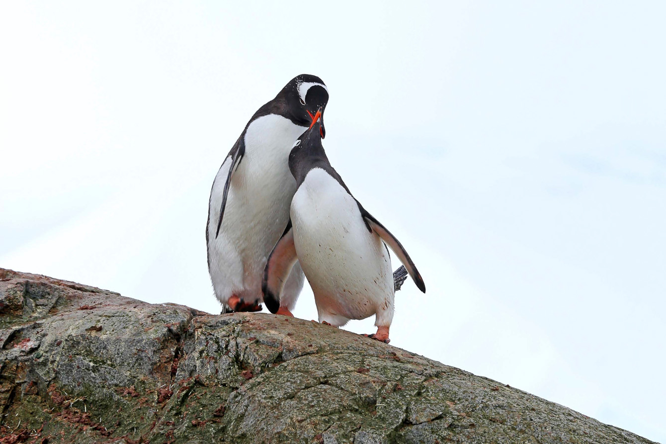 HANSEATIC-Antarktis-Hapag-Lloyd-Cruises-20