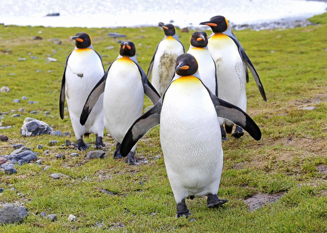 HANSEATIC-Antarktis-Hapag-Lloyd-Cruises-7