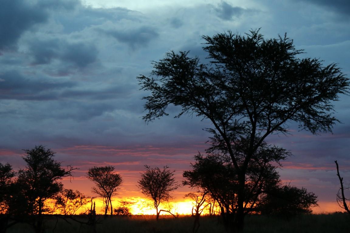 Abend in der Serengeti