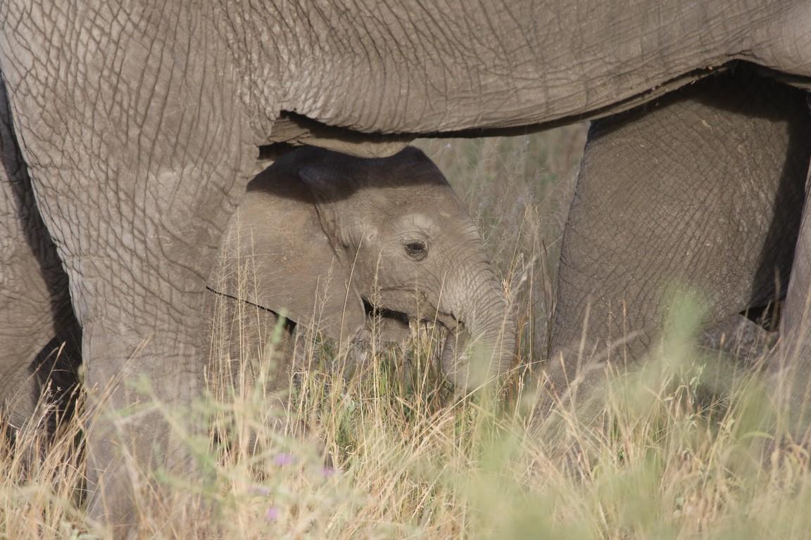 Kleiner Mann in großer Welt, Serengeti