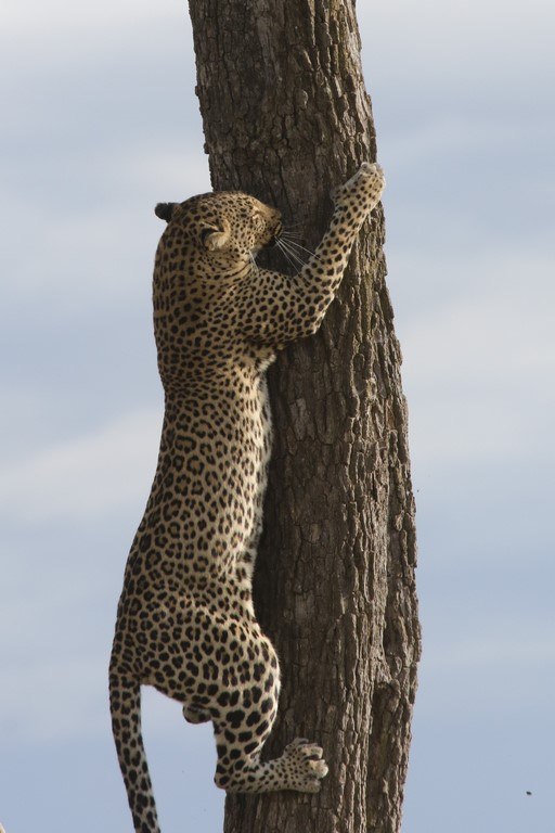 Rückwärts vom Baum