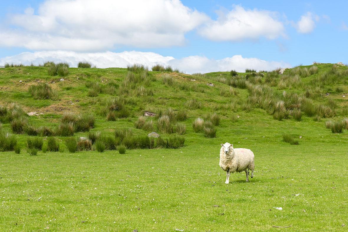 Lagavulin (Islay) (7)