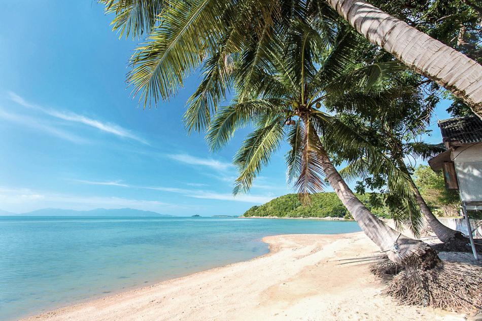 Palm trees overhanging Bangrak Beach, Koh Samui, Thailand, Southeast Asia, Asia
