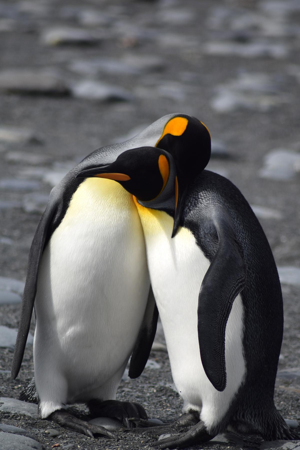 Antarktis2