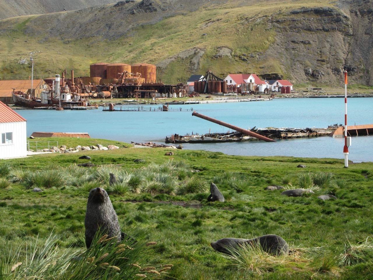 HANSEATIC_Grytviken_Totale