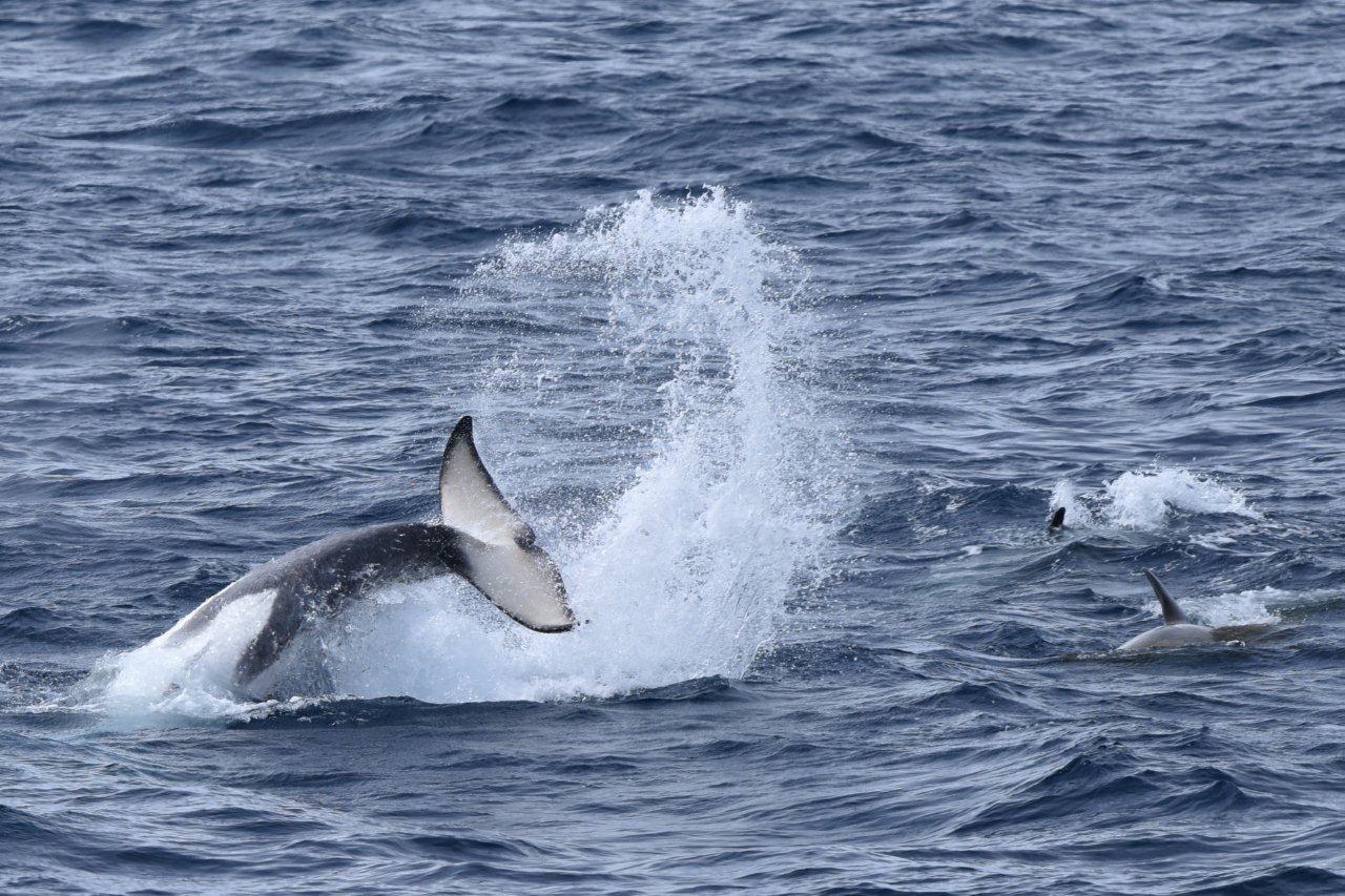 21-Orcas25