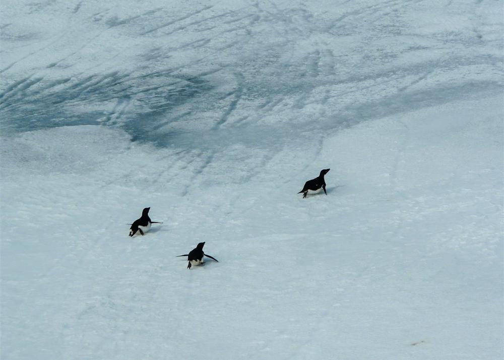 MS BREMEN, Hapag-Lloyd Cruises, im Weddellmeer, Antarktis.