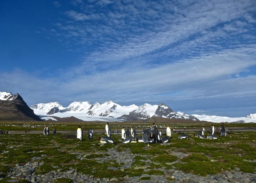 Koenigspinguine-Kertelhein-Antarktis-10