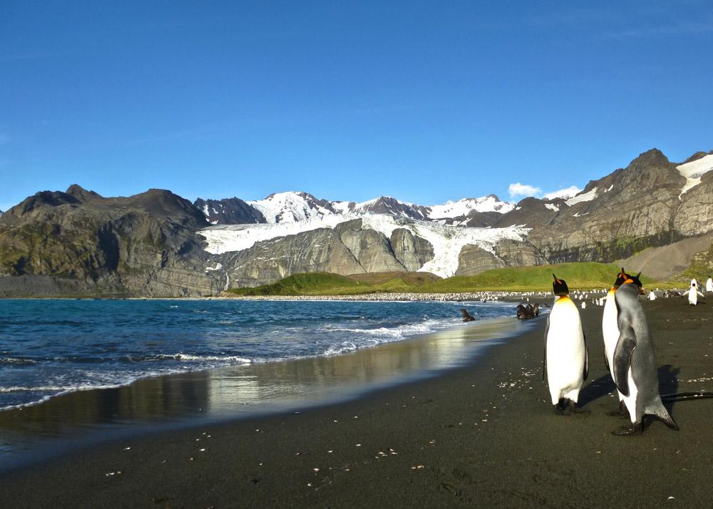 Koenigspinguine-Kertelhein-Antarktis-6
