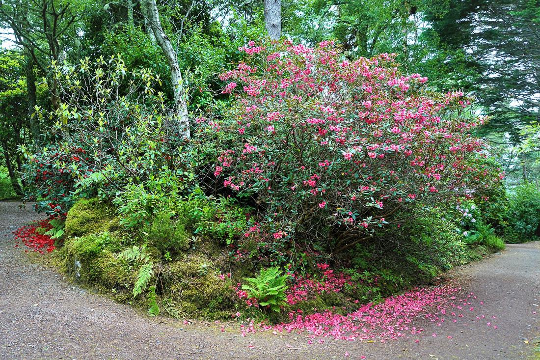 Inverewe Garden-1