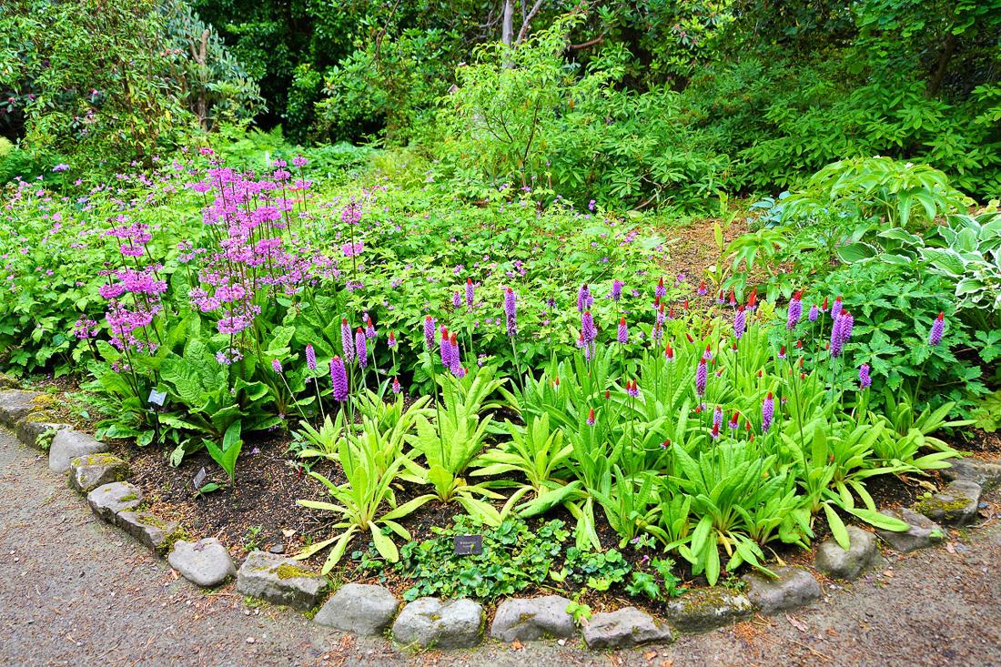 Inverewe Garden-2