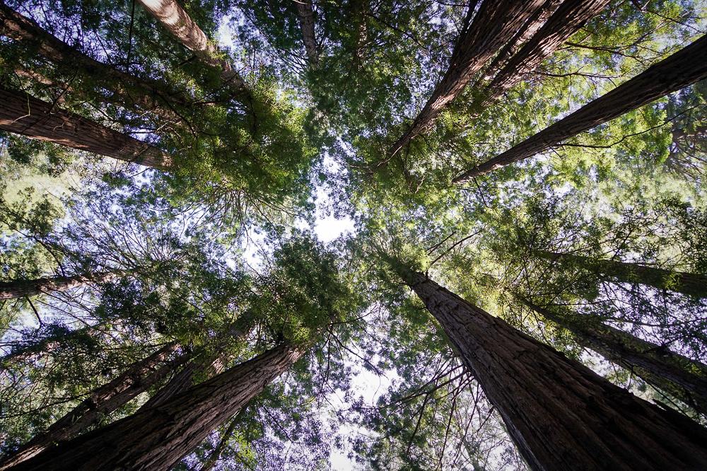 Muir Wood (3)