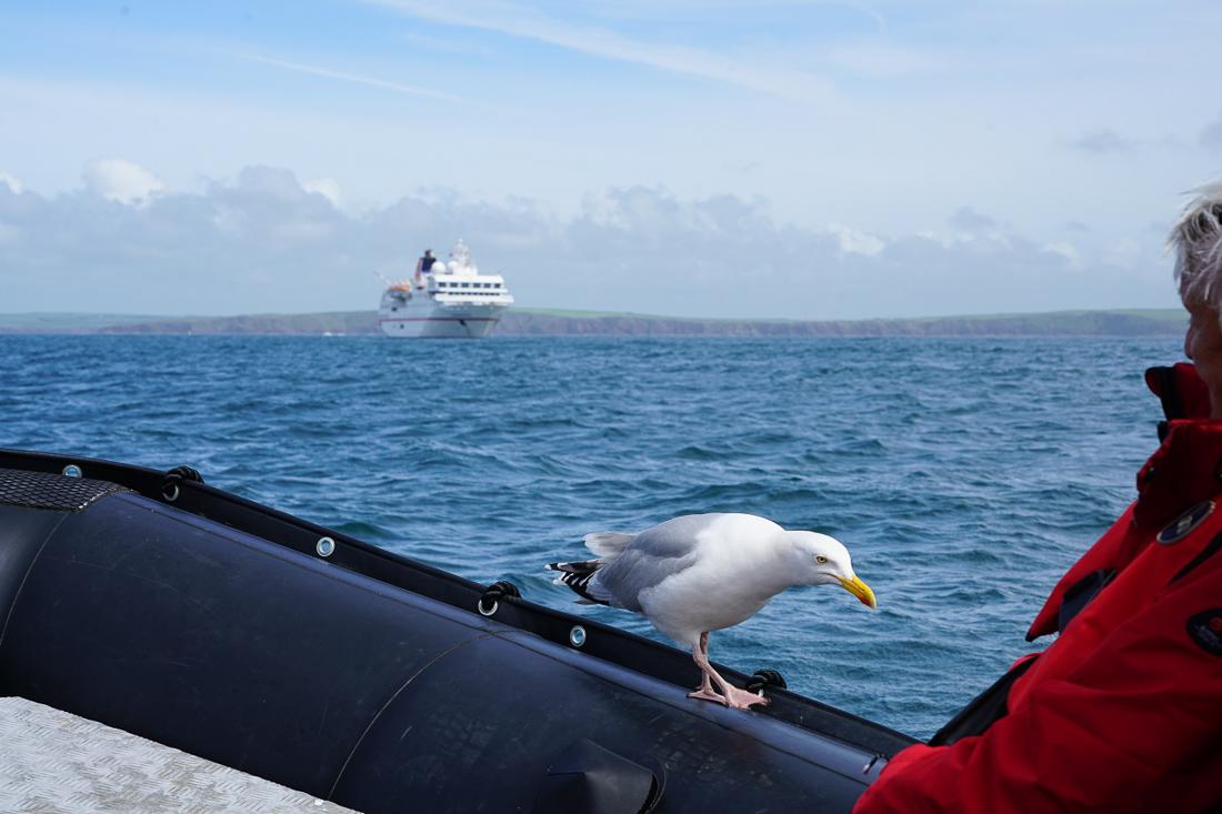 Zodiac-Cruising Skomer Island