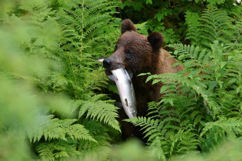 015Wrangell_Alaska_USA031