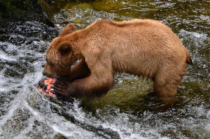 015Wrangell_Alaska_USA042