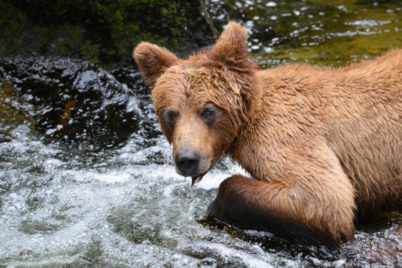 015Wrangell_Alaska_USA050