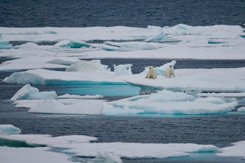 Eisbären (2)