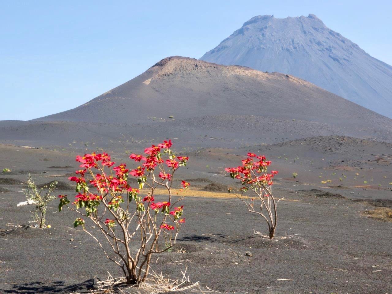 Aschefeld und Pico de Fogo
