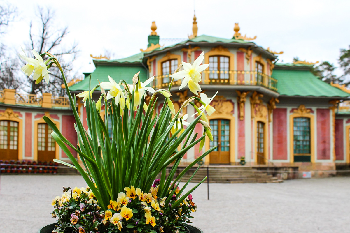 Chinesisches Schloss Drottningholm, Narzissen+Stiefmütterchen (C) Seick
