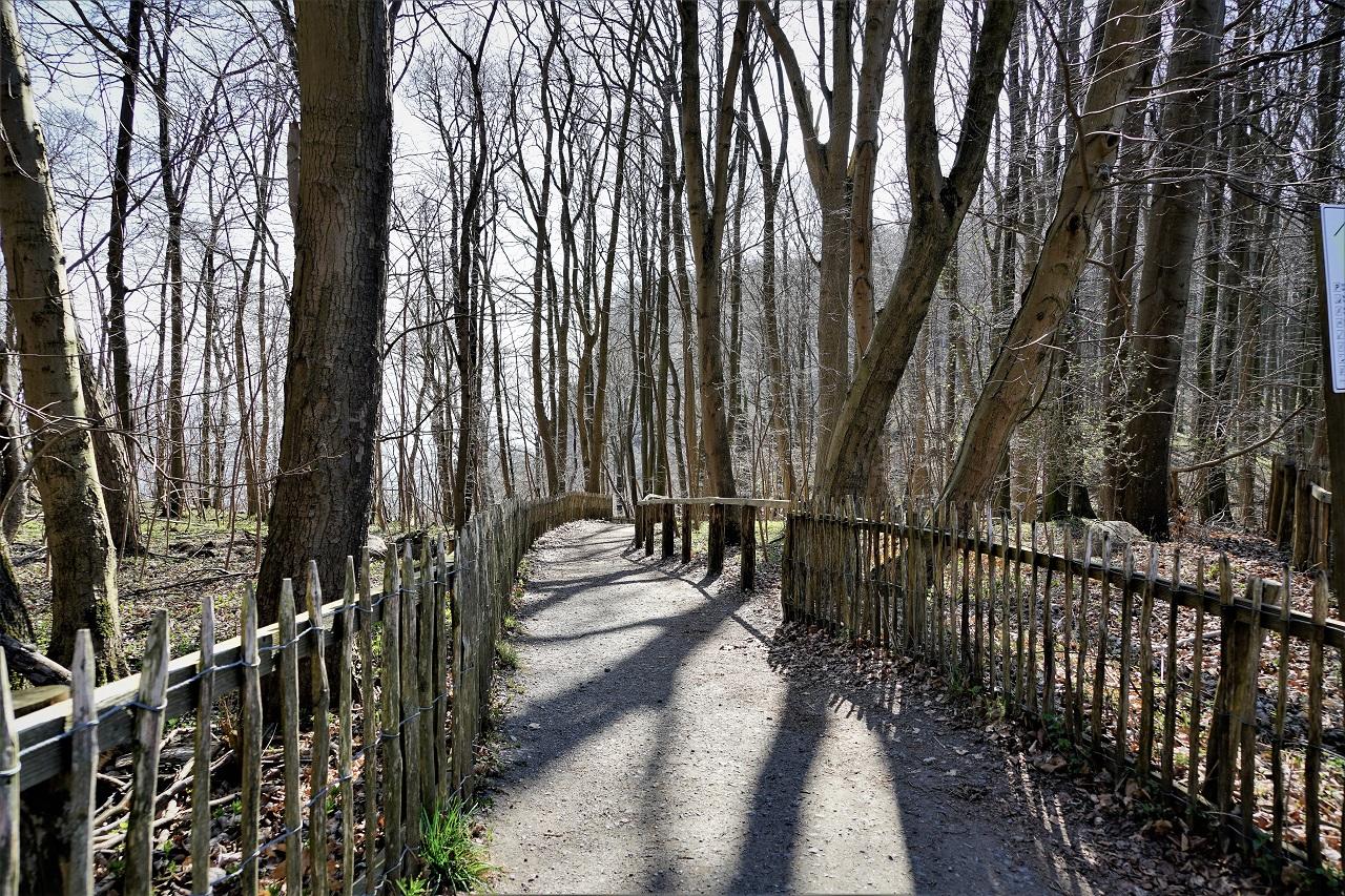 DSC06132 Weg durch den Buchenwald am Königsstuhl