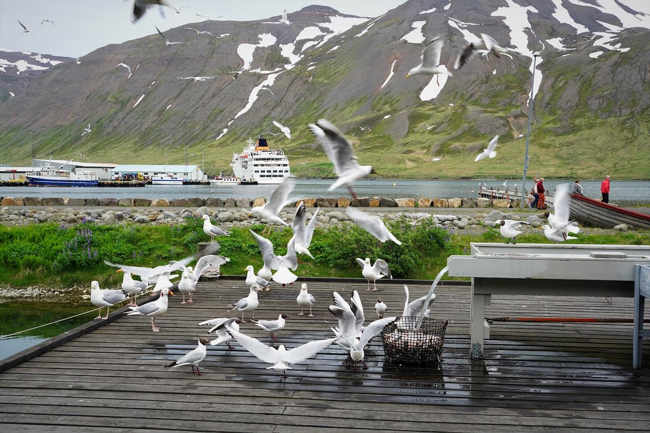DSC08417 Siglufjörður